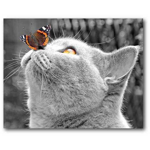Butterfly on Nose Gallery-Wrapped Canvas Wall Art