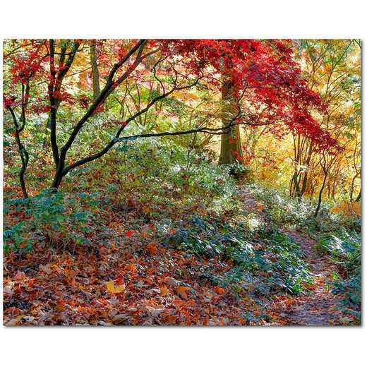 "Secret Garden 16""x20"" Gallery-Wrapped Canvas Wall Art"