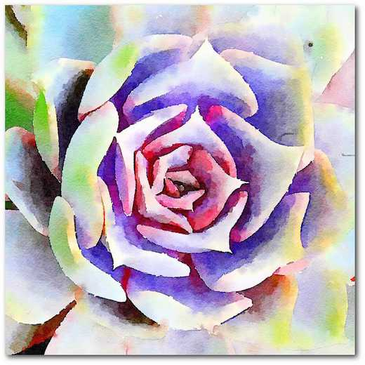 "Succulente II 16""x16"" Gallery-Wrapped Canvas Wall Art"