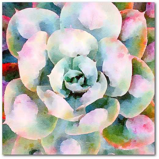"Succulente V 16""x16"" Gallery-Wrapped Canvas Wall Art"