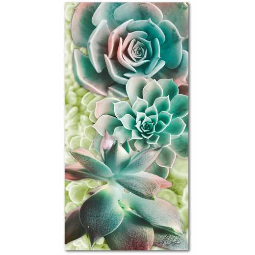 "Adored Succulents  12""x24"" Gallery-Wrapped Canvas Wall Art"
