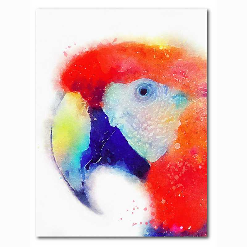 WEB-MV364-18x24: Colorful Pirate , 18x24