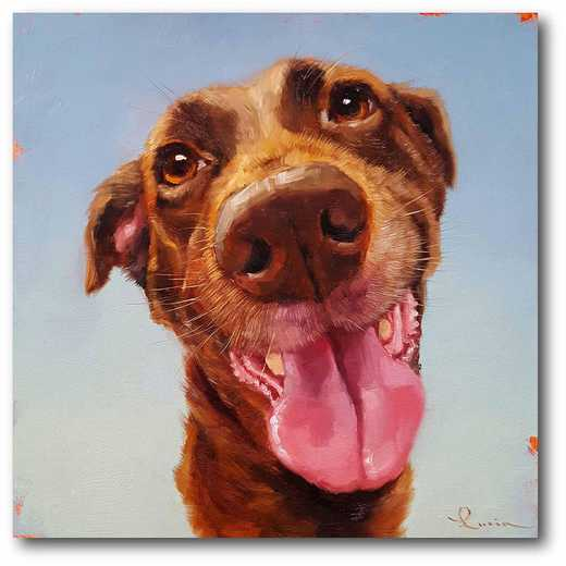 WEB-MV213: Brown Lab Follow Your Nose Canvas 16x16