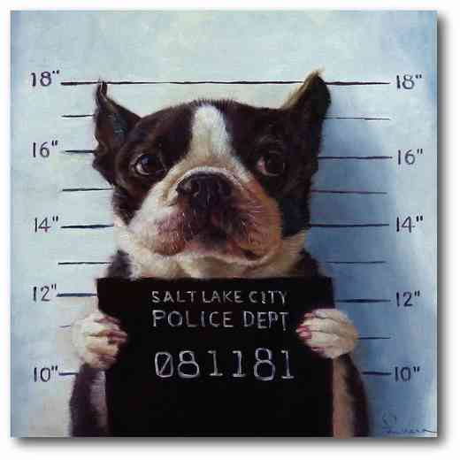 DEC-MV199: Dog Mugshot Large Decal 50x50