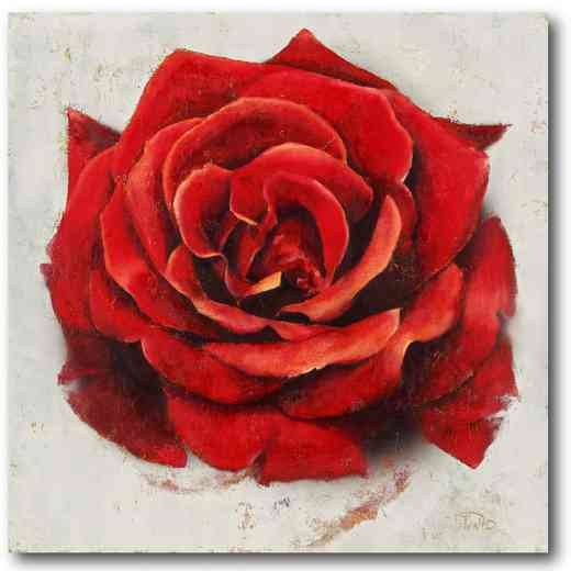 WEB-FD102-16x16: Romatic Rose, 16X16